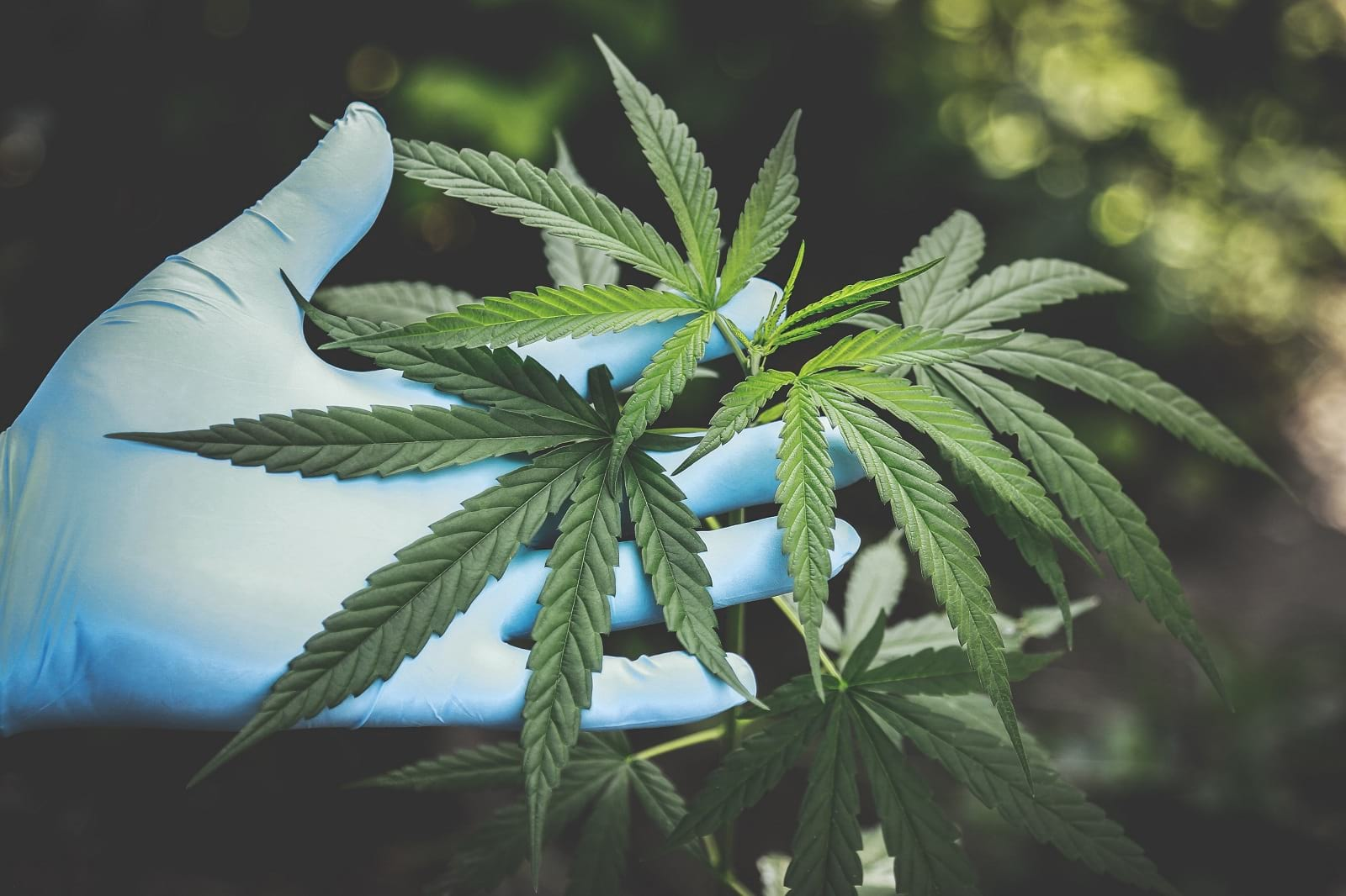 it for cannabis industry